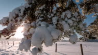 Camera moves from right to left and takes a winter landscape with tree branches and a field video