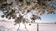 Camera moves from the bottom up and remove tree branches covered with snow video