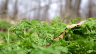 Camera slides along path revealing windy ferns in a vibrant jungle video