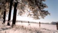 Camera takes a bottom up covering the winter field and trees with snow on the branches video