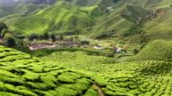 Cameron Highlands Pahang State Malaysia video