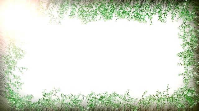 Camomile frame white video