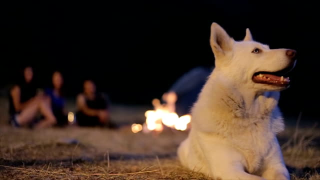 Camping with a dog video