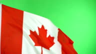 4K: Canadian Canada Flag on green screen, Real video, not CGI video