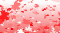 Canadian flag color falling leafs autumn loopable video