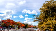 Canal in Bangkok with beautiful trees video