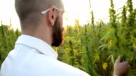 Cannabis. video