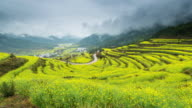 Canola field (Cole flowers) in Jiangling Wuyuan,China video