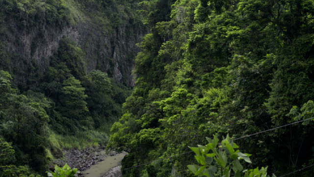 Canyon of river in rainforest. video