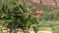 Canyon Vegetation video