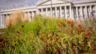 Capitol Building Dome flag rack focus from flowers to building video