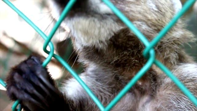 Captivity video