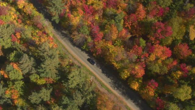 AERIAL TOP DOWN: SUV car driving empty road in beautiful colorful autumn forest video