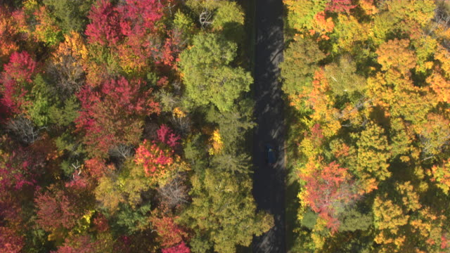 AERIAL TOP DOWN SUV car driving empty road in beautiful colorful autumn forest video