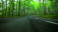 Car driving on forest road video