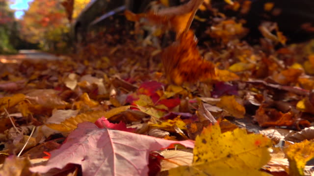 SLOW MOTION: Car driving over bright autumn leaves lying on colorful forest road video