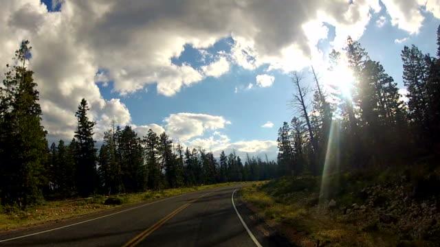 Car driving through national park road video