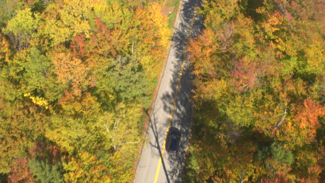 AERIAL TOP DOWN: SUV car driving under bright yellow treetops in autumn forest video