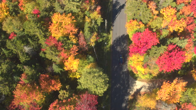 AERIAL TOP DOWN: SUV car driving under red and yellow treetops in autumn forest video
