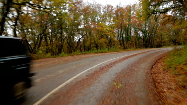 Car Moving In Autumn Forest Along Winding Road video