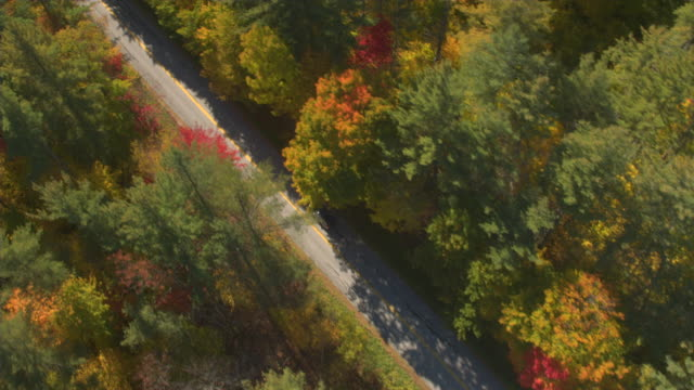 AERIAL: SUV car on leaf peeping road trip driving through colorful autumn forest video