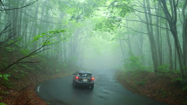 Car on the Road through forest in fog. video