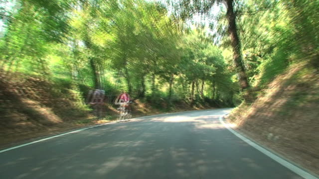 Car travelling along Italian tree-lined country roads video