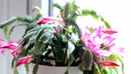 Care of home flowers video