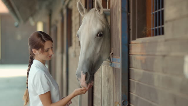 SLO MO DS Caretaker caressing horse looking out of stable video