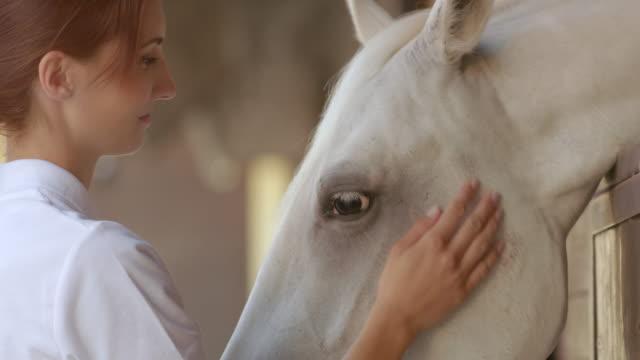 SLO MO Caretaker giving the white horse some treats video
