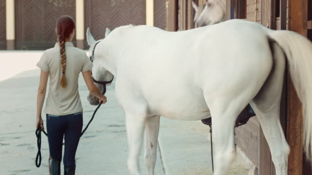 DS Caretaker leading a white horse out of the stable video
