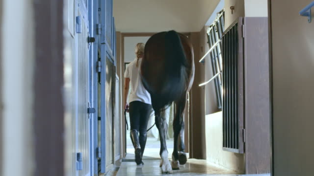 DS Caretaker leading bay horse out of the stable box video
