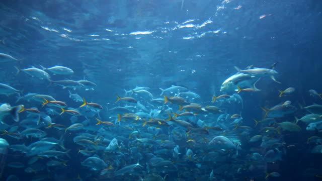 Caribbean Cruise 005 - Aquarium video