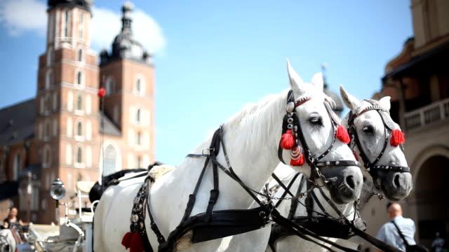 Carriage city tour video