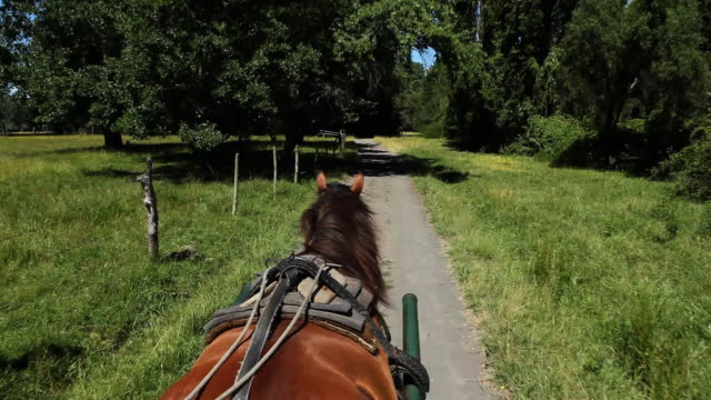Carriage Ride video