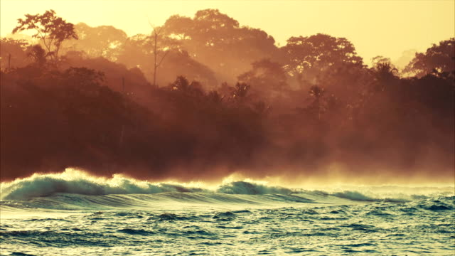 Carribean coast with tropical forest video