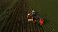 Carrot harvesting at the farmer's field.Aerial view video