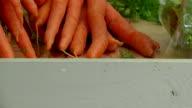 Carrots video