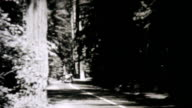 Cars Driving Through Redwood Forest-1940 Vintage 8mm film video