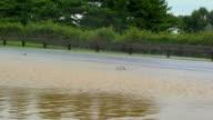 Cars Splashing Through Flood Waters video