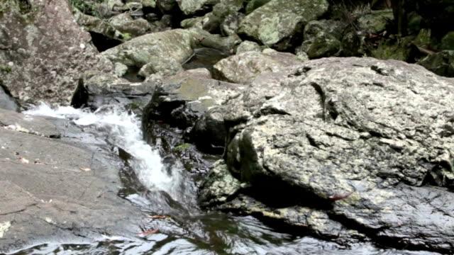 Cascade video