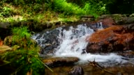 cascade with riparian zone in tropical forest video