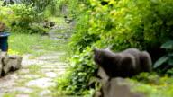 Cat and ducks in a garden video