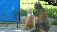 cat and the kitten sit back outdoors slow motion video video