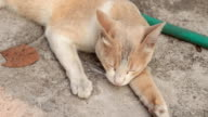 cat are sleeping video