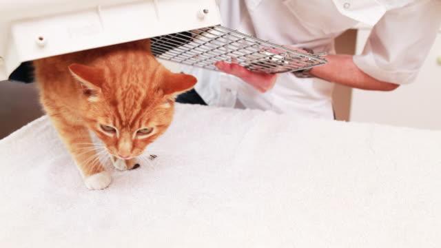 Cat arrives at the vet video