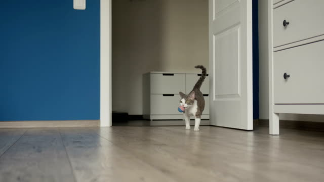 Cat carrying toy ball in jaws video