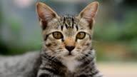 Cat cute pets video