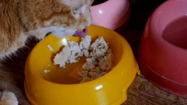 Cat eating from bowl. video