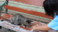 Cat eating on the bench. video